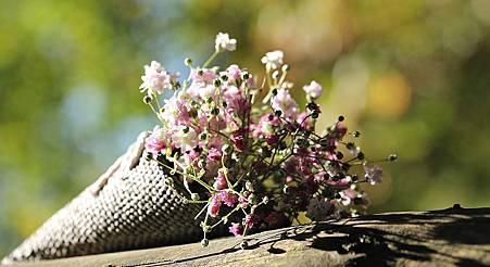 bag-gypsofilia-seeds-1716655__480