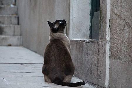 cat-679798-640_4_orig