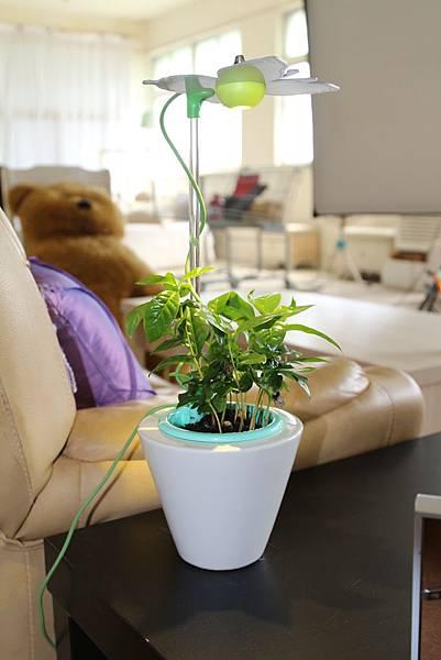 時尚植物燈 智慧型圓錐型花器