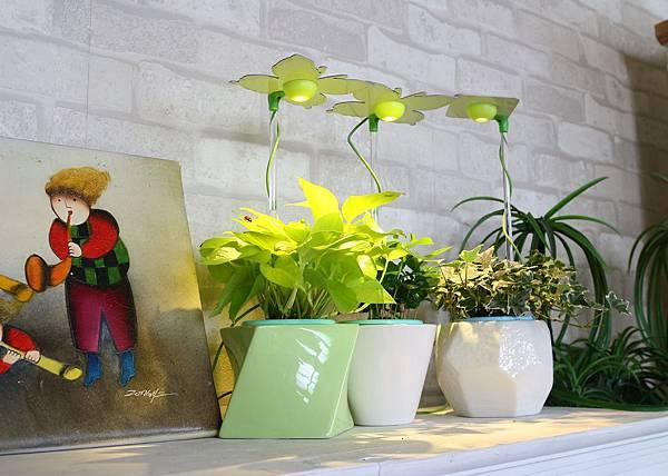 愛綠生活時尚植物燈-花盆款