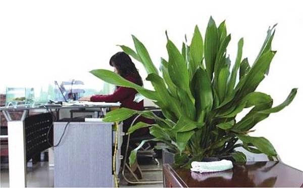 綠化的辦公室1