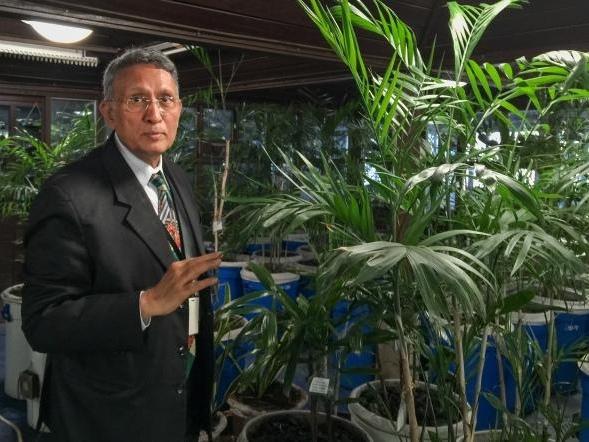 帕哈普爾商務中心(Paharpur Business Centre)執行長卡瑪.麥鐸(Kamal Meattle)在自己辦公大樓的溫室中種了四百株植物來淨化室內空氣。PHOTOGRAPH BY WENDY KOCH