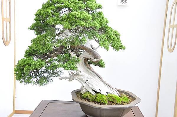 2015漢風展_0255.jpg