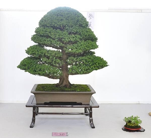2015漢風展_0448.jpg