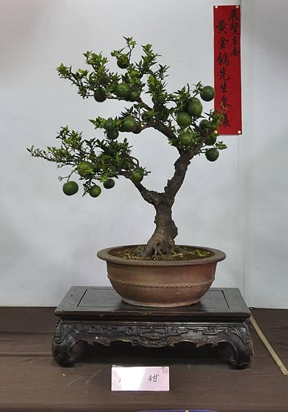 2015台灣花菓盆栽展0009.jpg
