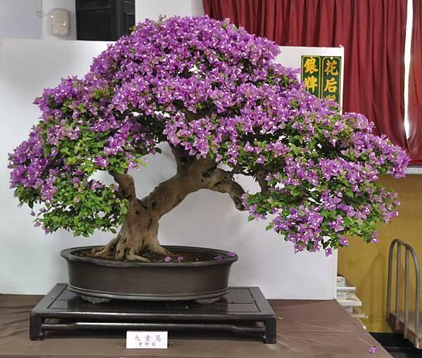 2015台灣花菓盆栽展0007.jpg