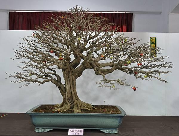 2015台灣花菓盆栽展0015.jpg