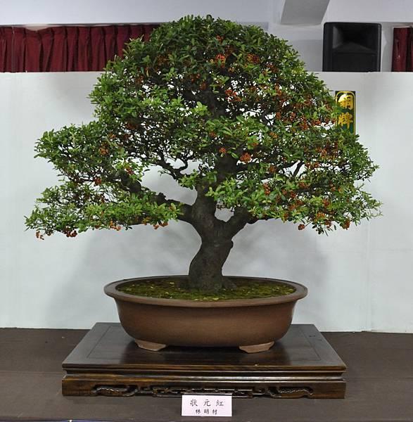 2015台灣花菓盆栽展0023.jpg