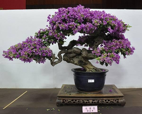 2015台灣花菓盆栽展0033.jpg