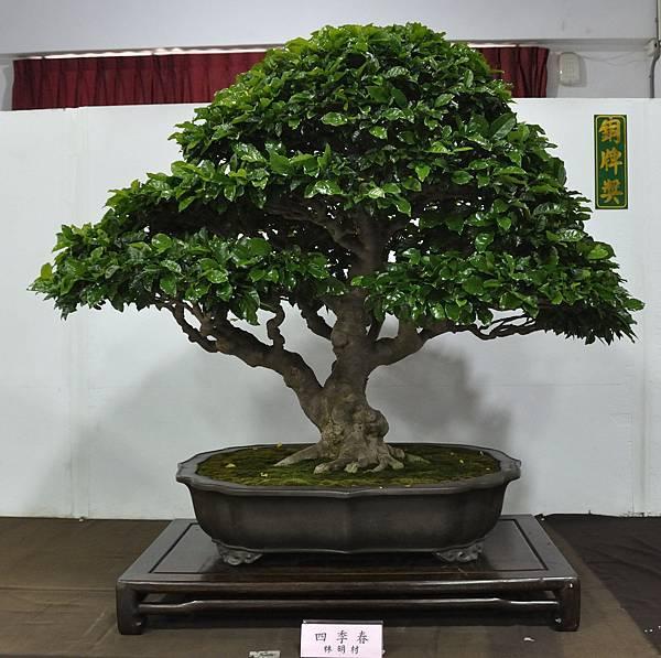 2015台灣花菓盆栽展0047.jpg