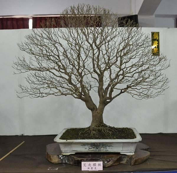 2015台灣花菓盆栽展0055.jpg