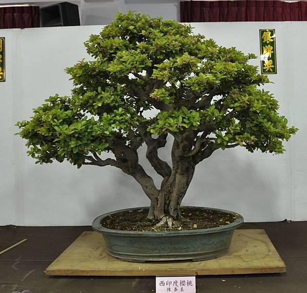 2015台灣花菓盆栽展0053.jpg