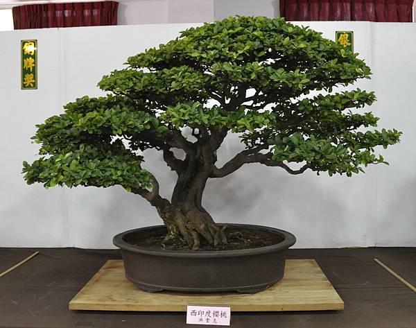 2015台灣花菓盆栽展0059.jpg