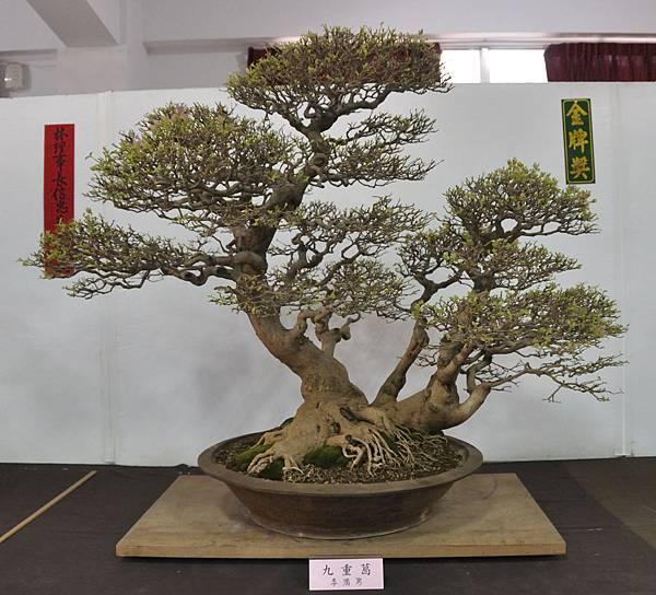 2015台灣花菓盆栽展0063.jpg