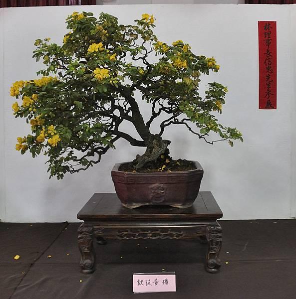 2015台灣花菓盆栽展0065.jpg