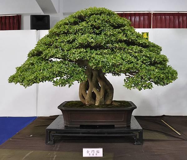2015台灣花菓盆栽展0069.jpg