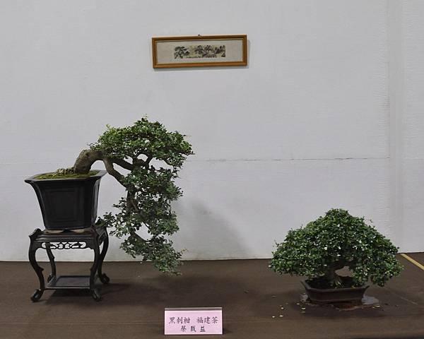 2015台灣花菓盆栽展0081.jpg