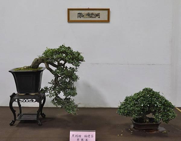 2015台灣花菓盆栽展0089.jpg