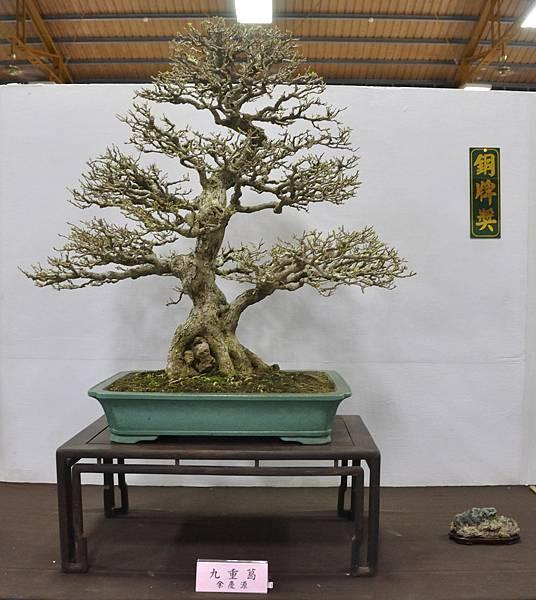 2015台灣花菓盆栽展0091.jpg