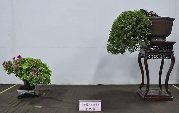2015台灣花菓盆栽展0106.jpg