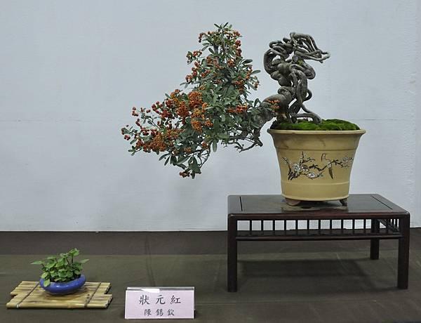 2015台灣花菓盆栽展0116.jpg