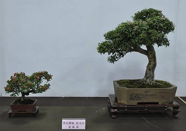 2015台灣花菓盆栽展0122.jpg