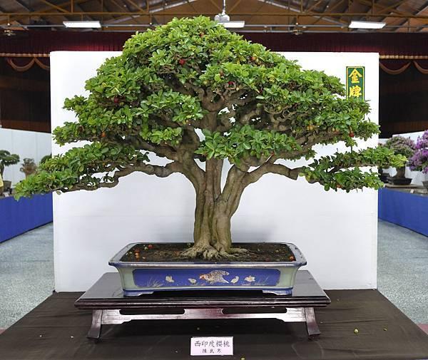 2015台灣花菓盆栽展0144.jpg
