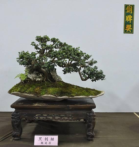 2015台灣花菓盆栽展0160.jpg