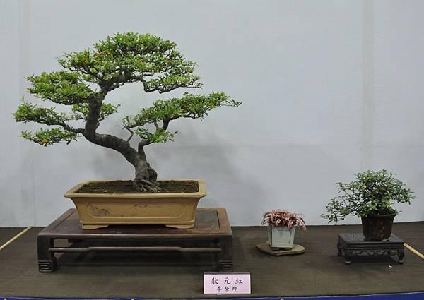 2015台灣花菓盆栽展0162.jpg