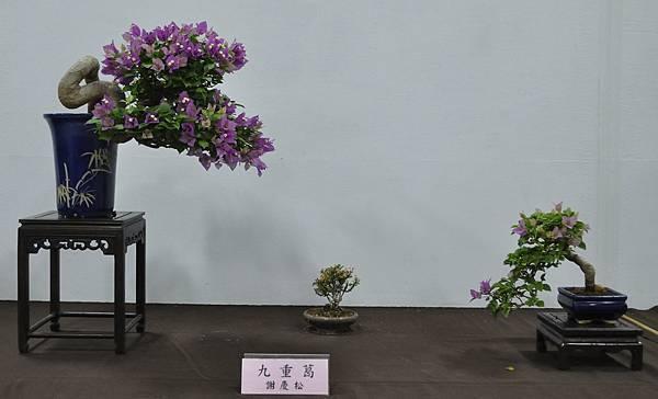 2015台灣花菓盆栽展0178.jpg