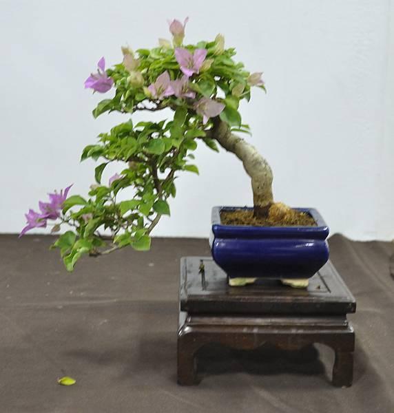 2015台灣花菓盆栽展0185.jpg
