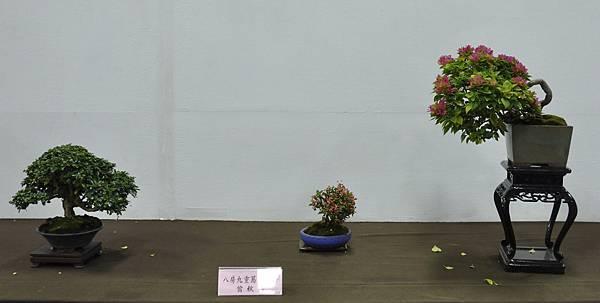 2015台灣花菓盆栽展0193.jpg