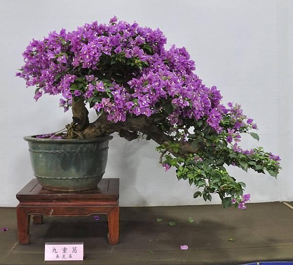 2015台灣花菓盆栽展0217.jpg