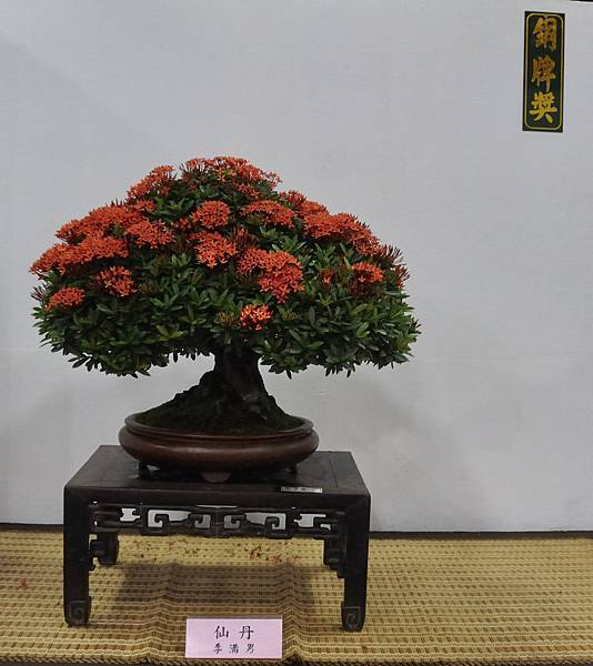 2015台灣花菓盆栽展0220.jpg