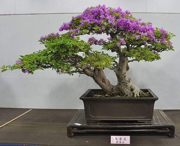 2015台灣花菓盆栽展0221.jpg