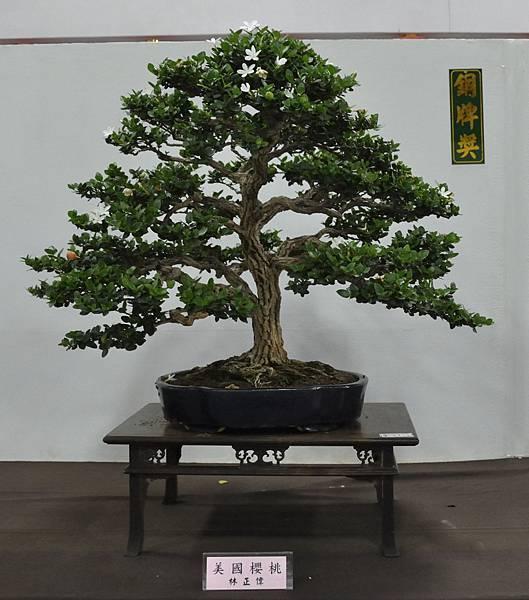 2015台灣花菓盆栽展0225.jpg