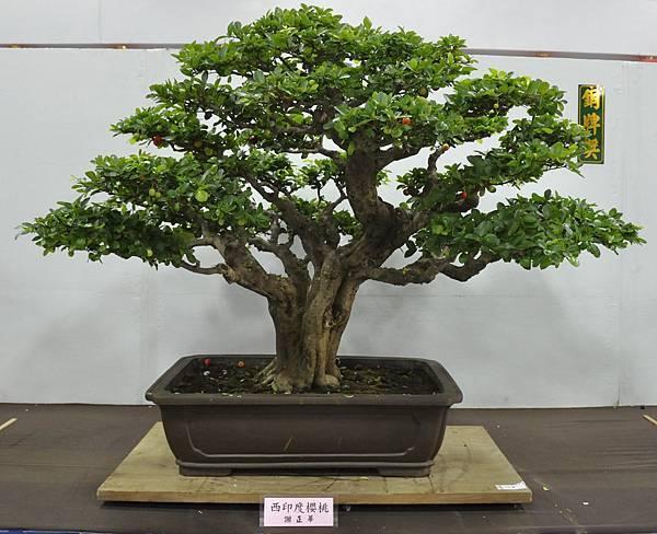 2015台灣花菓盆栽展0227.jpg