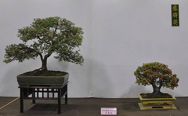 2015台灣花菓盆栽展0237.jpg