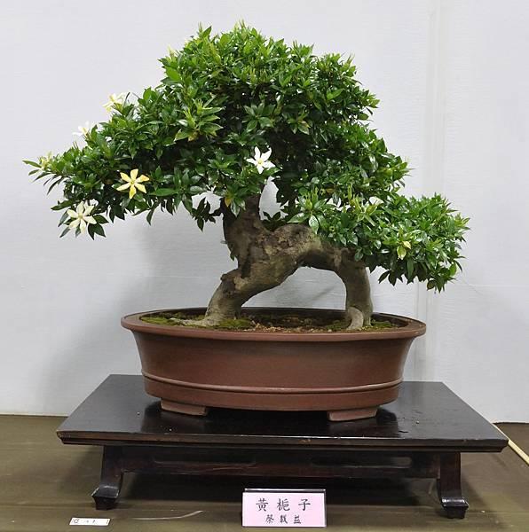 2015台灣花菓盆栽展0250.jpg