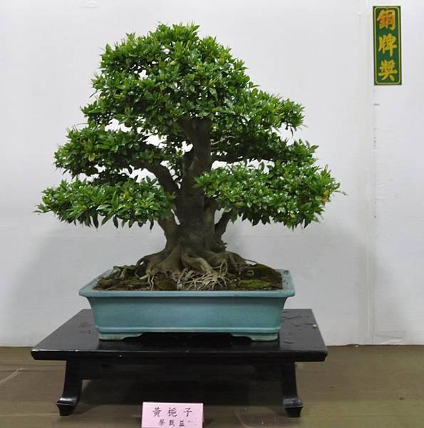 2015台灣花菓盆栽展0252.jpg