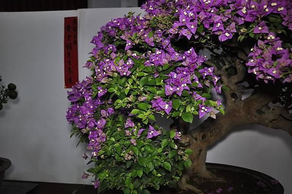 2015台灣花菓盆栽展0288.jpg