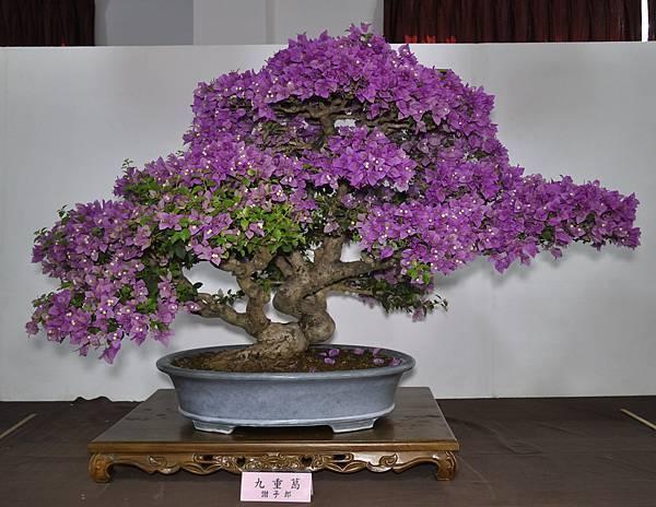2015台灣花菓盆栽展0307.jpg