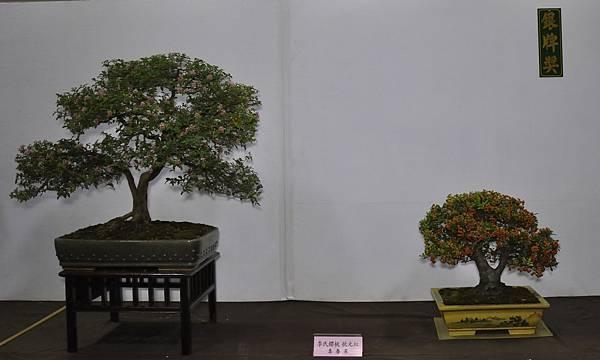 2015台灣花菓盆栽展0318.jpg