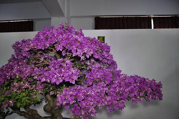 2015台灣花菓盆栽展0316.jpg