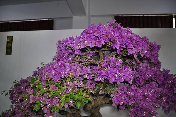 2015台灣花菓盆栽展0317.jpg