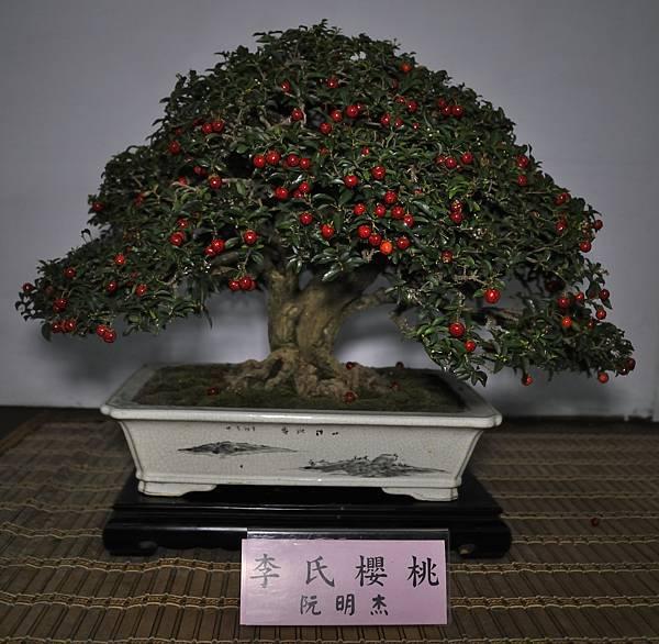 2015台灣花菓盆栽展0329.jpg