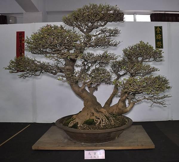 2015台灣花菓盆栽展0383.jpg