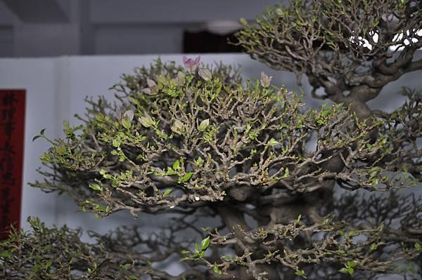 2015台灣花菓盆栽展0390.jpg