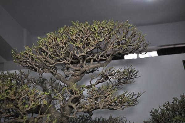 2015台灣花菓盆栽展0389.jpg