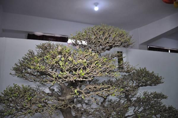 2015台灣花菓盆栽展0399.jpg